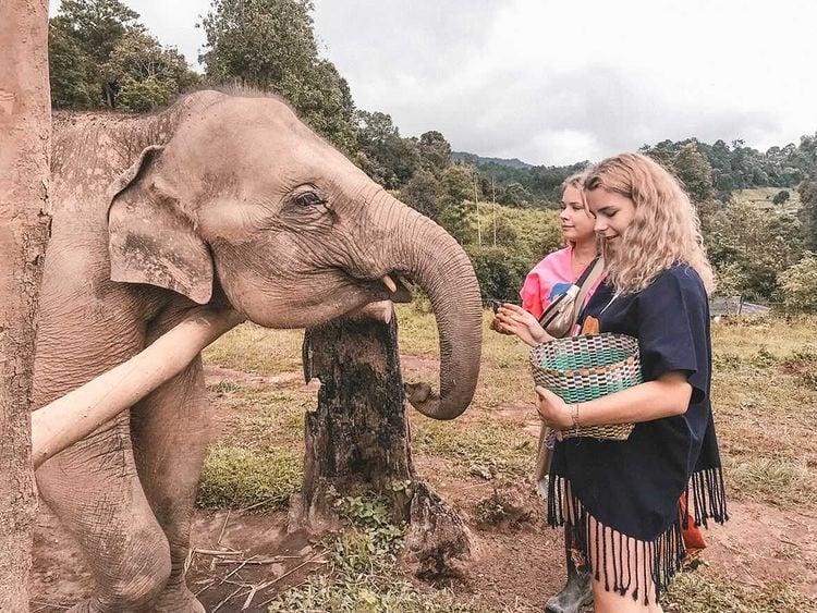 Fütterung-Elefanten