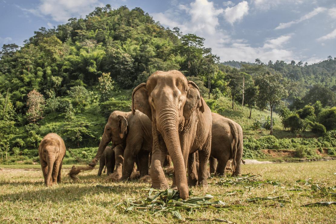 Elephant Nature Park -1