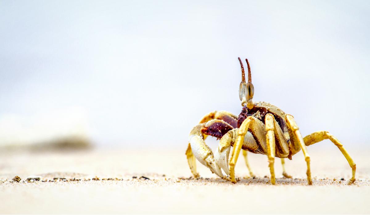 Koh Muk - Ao Kham Beach Crab Beach Thailand