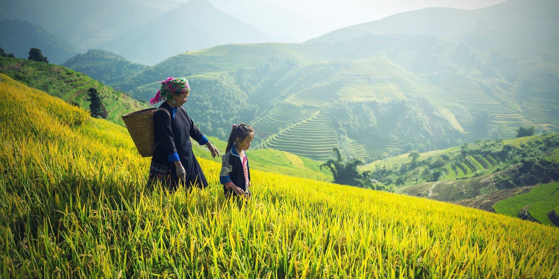 rice valley asiaventura sapa vietnam cut