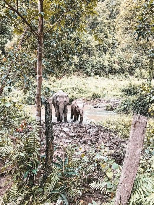 keine-gefangenschaft-elefanten