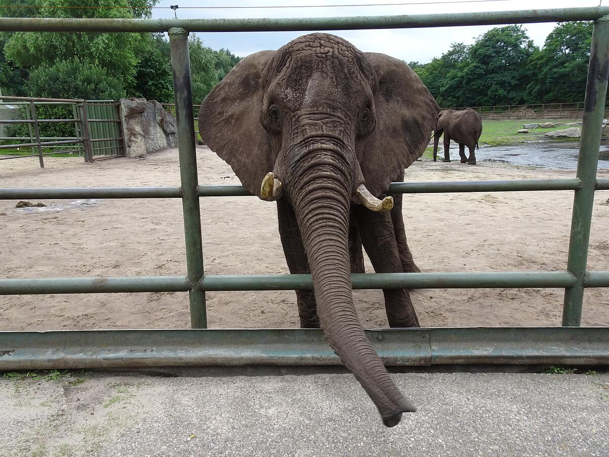 elefant-thailand-eingesperrt